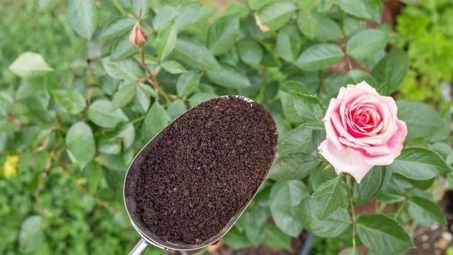 3 Lợi ích bất ngờ từ bã cà phê SAVINA cho khu vườn xinh đẹp nhà bạn